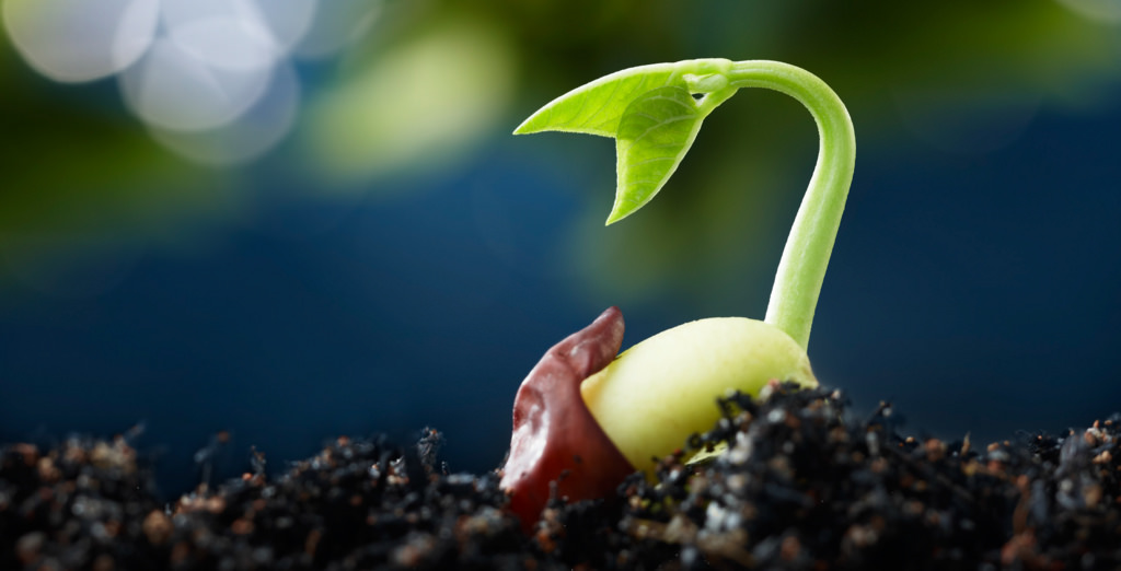 Sowing the Seeds of a Curious Eater